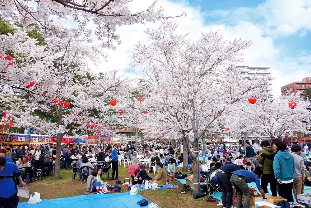 西公園櫻岡花見の風景