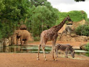 アフリカ生態園
