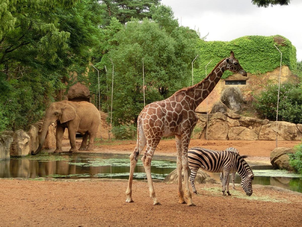 観光スポット:仙台市八木山動物公園