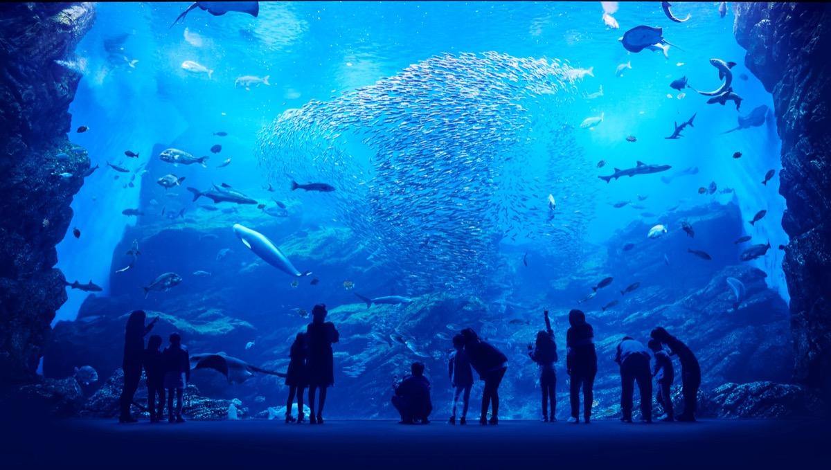 観光スポット:仙台うみの杜水族館