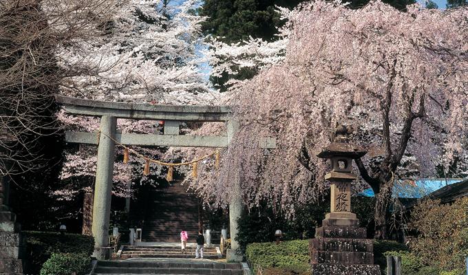 二之鳥居と桜の様子