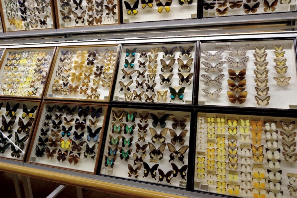 蝶展示室の様子