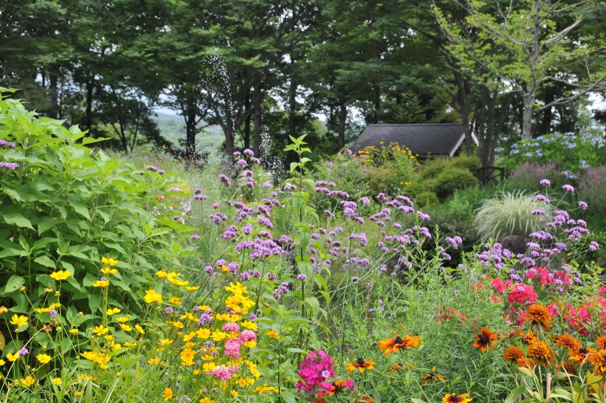 8月夏真っ盛りの花壇の様子