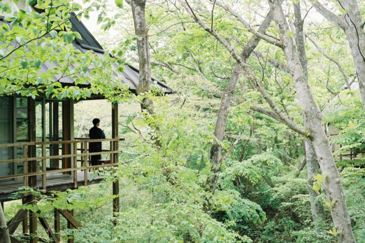 ジャンル:温泉山荘だいこんの花