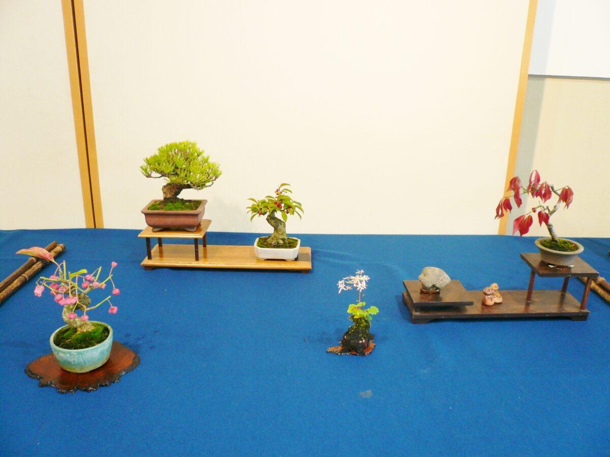 イベント:杜の文化展~盆栽・山野草・水石~