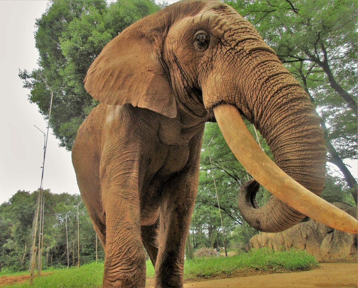 ジャンル:八木山動物公園フジサキの杜「世界野生生物保全の日」イベント