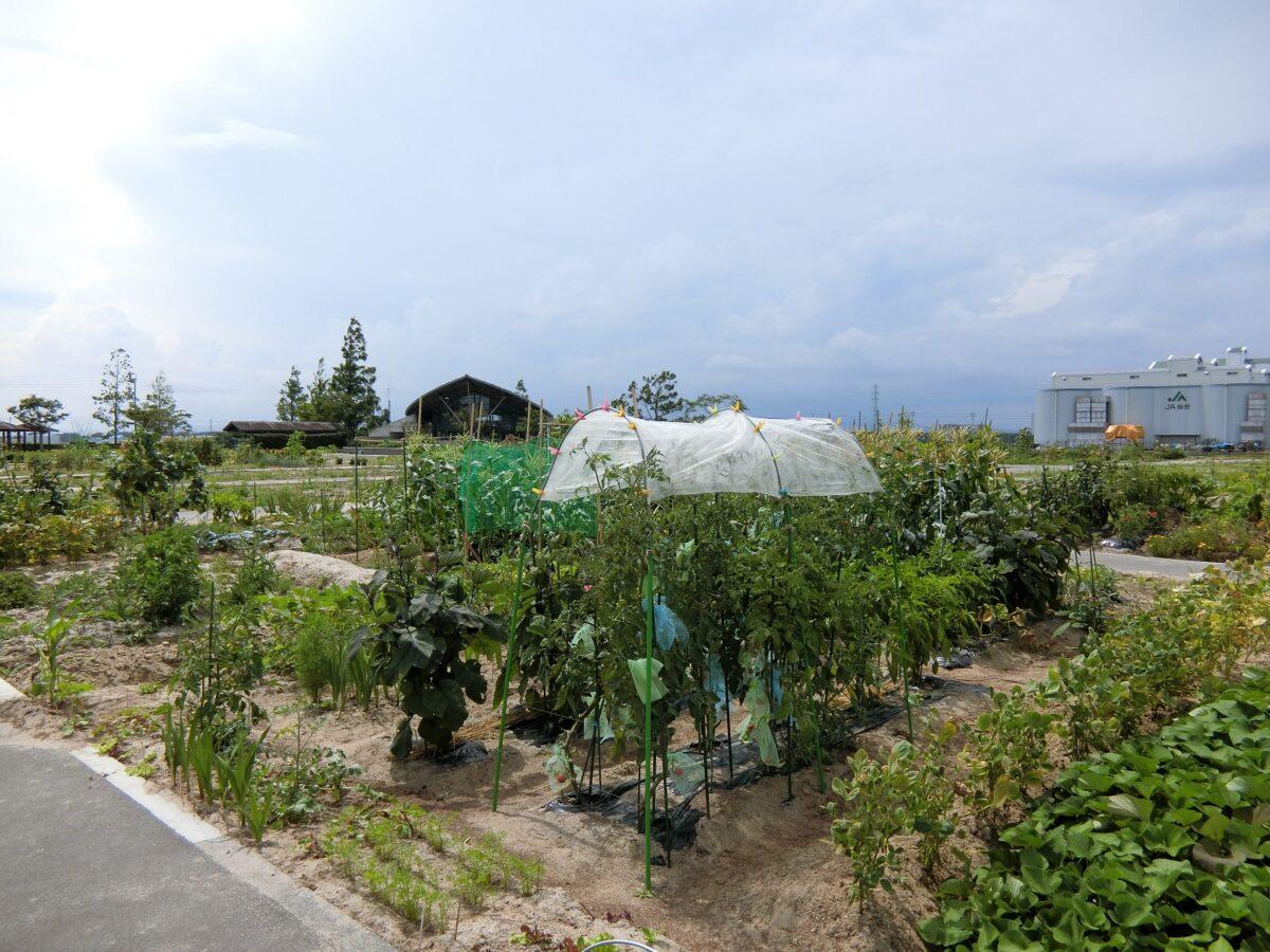 市民農園の様子