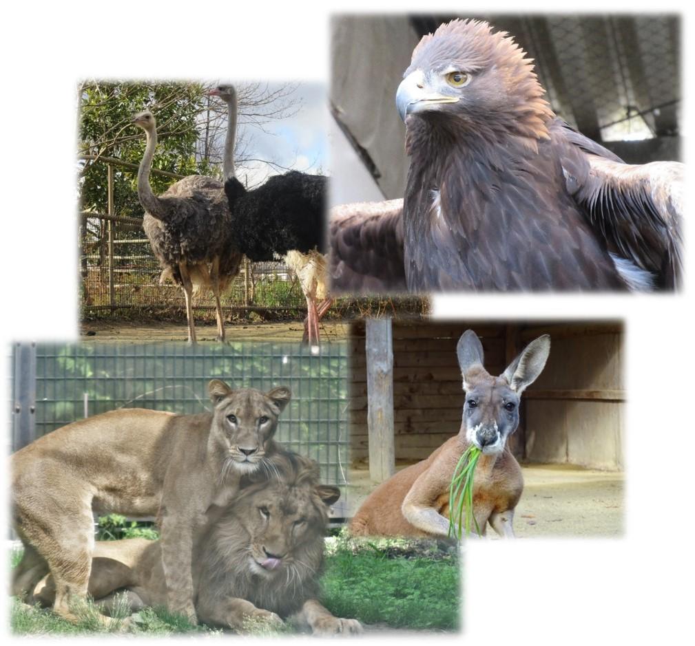 ジャンル:八木山動物公園フジサキの杜 飼育員による動物のおはなし